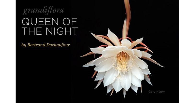3 - Queen of the Night - Bertrand Duchaufour's Latest